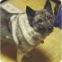 Adopt A Pet :: Lady - Belleville, MI