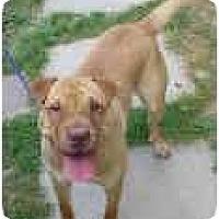 Adopt A Pet :: Ribbon - Bethesda, MD