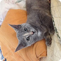 Adopt A Pet :: Dale Evans - Troy, OH