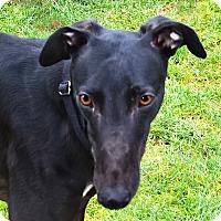 Adopt A Pet :: Blank - Seattle, WA
