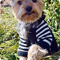 Adopt A Pet :: Sage-Adoption pending - Bridgeton, MO