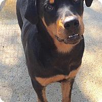 Adopt A Pet :: Neiko - McDonough, GA