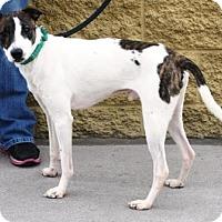 Adopt A Pet :: James - Gilbert, AZ