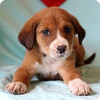 Adopt A Pet :: Kayl - Waldorf, MD