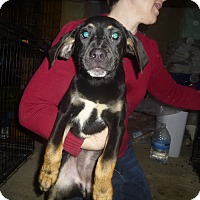 Adopt A Pet :: Bianna - Glastonbury, CT