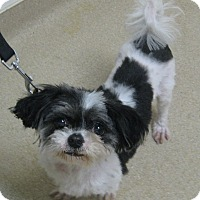 Adopt A Pet :: Dottie - Gary, IN