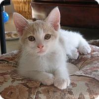 Adopt A Pet :: Forsythia - Covington, KY