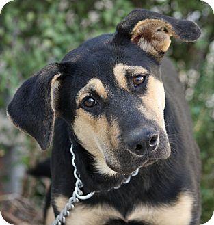 German Shepherd Dog Mix Dog for adoption in Los Angeles, California - Trudi von Tripdis