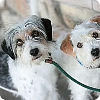 Adopt A Pet :: Jeff - Canoga Park, CA
