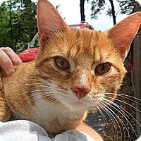 Adopt A Pet :: Schuyler - Kalamazoo, MI