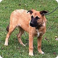 Adopt A Pet :: Maizy - Byrdstown, TN