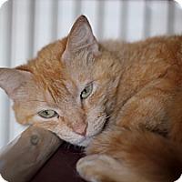 Adopt A Pet :: Spessartina - Chicago, IL
