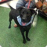 Adopt A Pet :: Chevy - Morgantown, WV