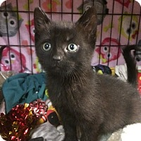 Adopt A Pet :: Flynn - East Brunswick, NJ