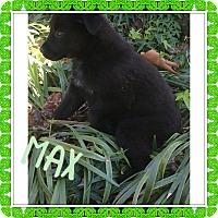 Adopt A Pet :: MAX, MARGO AND MADDOX - PARSIPPANY, NJ