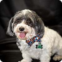 Adopt A Pet :: Topper - Glastonbury, CT
