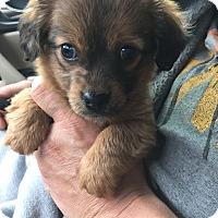 Adopt A Pet :: Forrest - Jasper, TN