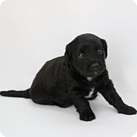 Adopt A Pet :: Kai - Yucaipa, CA