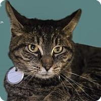 Adopt A Pet :: Ying - Kalamazoo, MI