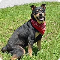 Adopt A Pet :: 10310986 - Brooksville, FL
