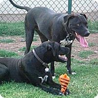 Adopt A Pet :: Lars and Heidi - Gilbert, AZ