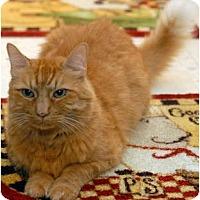 Adopt A Pet :: Rambo - Alexandria, VA