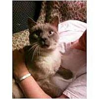 Adopt A Pet :: Jenna - Columbus, OH
