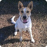 Adopt A Pet :: Bailey - Tallahassee, FL