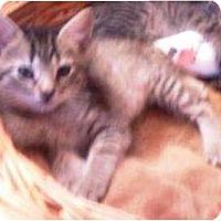 Adopt A Pet :: Joule - Summerville, SC