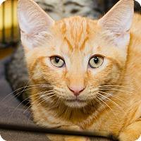 Adopt A Pet :: Pickles - Irvine, CA