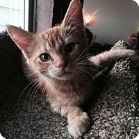 Adopt A Pet :: Vector - Edmonton, AB