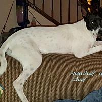 Adopt A Pet :: Mischief in San Antonio - San Antonio, TX