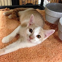 Adopt A Pet :: Julian - Miami, FL