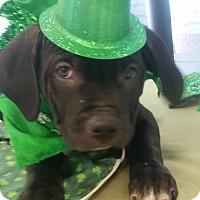 Adopt A Pet :: Archie - Detroit, MI