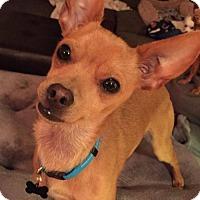 Adopt A Pet :: Minnie Pearl - Denver, CO