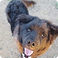 Adopt A Pet :: Tracer! - Sacramento, CA