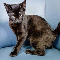 Adopt A Pet :: Prince - oakland park, FL