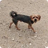 Adopt A Pet :: Peter - Poland, IN