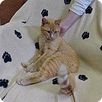 Adopt A Pet :: Terra - St. Louis, MO