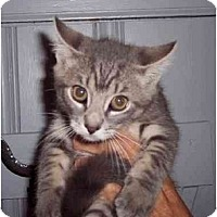 Adopt A Pet :: Derrick - Jenkintown, PA