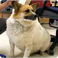 Adopt A Pet :: Fergie - Scottsdale, AZ