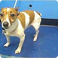 Adopt A Pet :: JAX - Dennis, MA