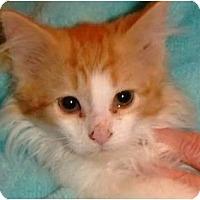 Adopt A Pet :: Gabriel - Riverside, RI