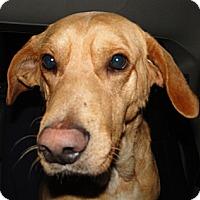 Adopt A Pet :: Carey - Columbus, IN
