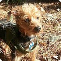 Adopt A Pet :: Snickers - Suwanee, GA
