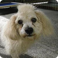 Adopt A Pet :: BURT - Odessa, FL