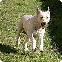 Adopt A Pet :: Sassy - Lufkin, TX
