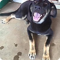 Adopt A Pet :: Ebony IN ct - Manchester, CT