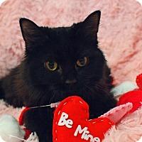 Adopt A Pet :: Ashes - Morgantown, WV