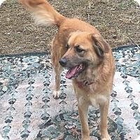 Adopt A Pet :: Bunny - Boerne, TX